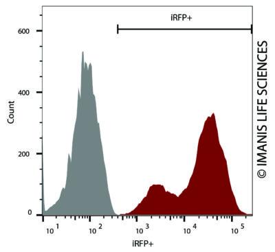 Hepa1 6 Irfp Puro Reporter Gene Cell Line Imanis Life Sciences